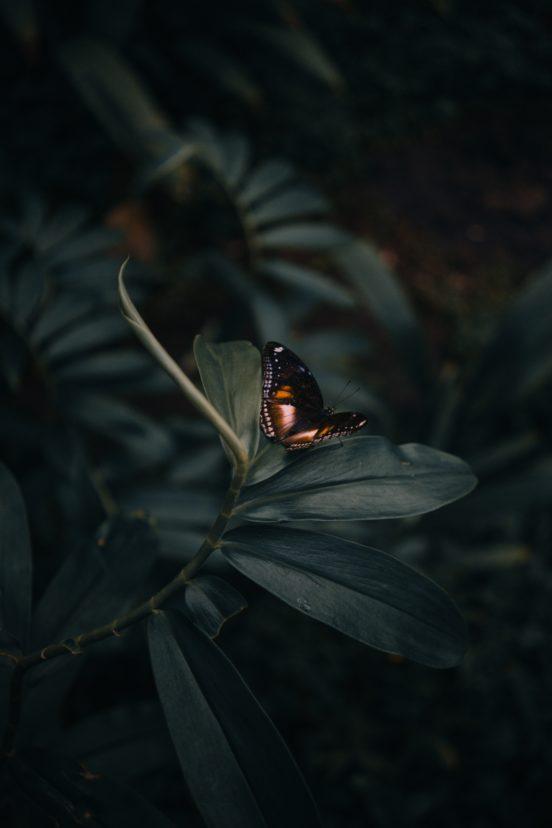 Schmetterling, düster, Blätter