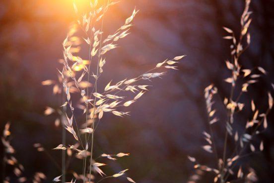 Gräser im Wind und Sonnenlicht